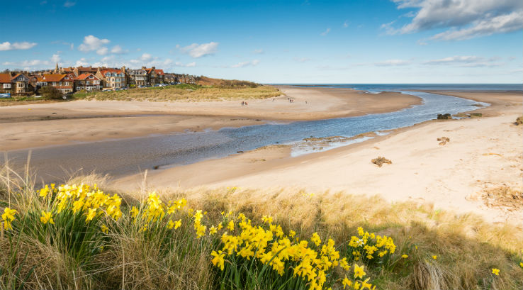 A view of Alnmouth Beach in Northumberland with daffodils in the foreground