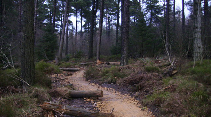 Mountain Bike Trail in Dalby Forest