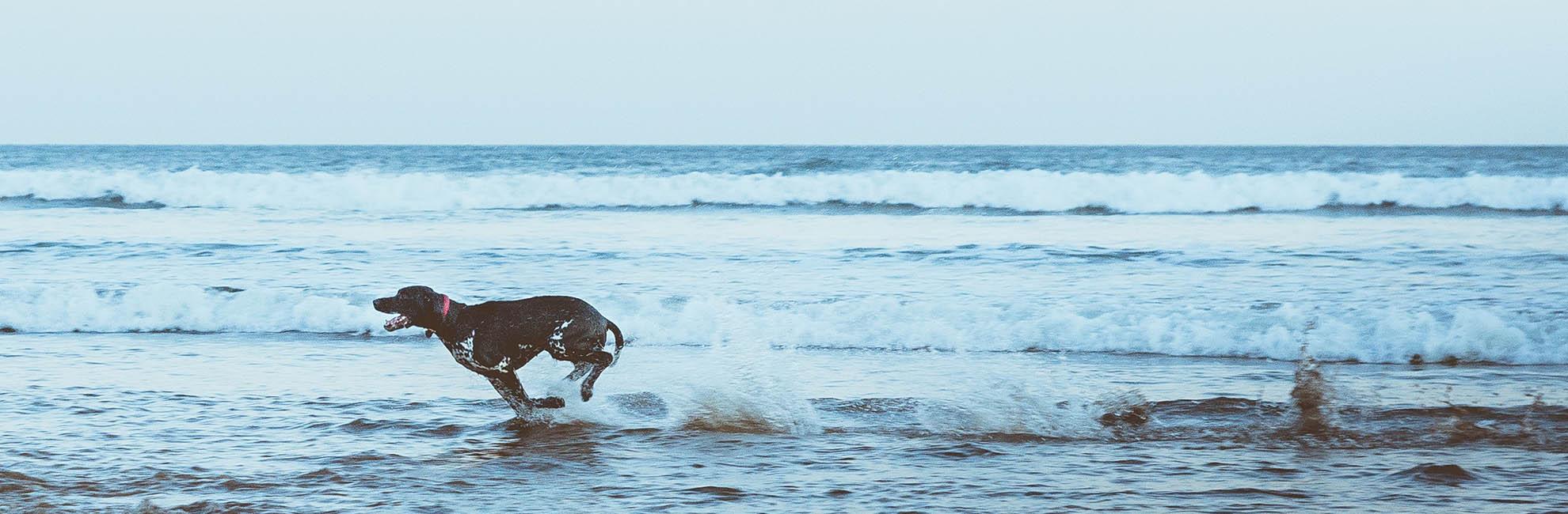 Dog Friendly Bank Holiday Breaks