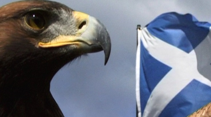 Eagle with Scottish flag in the background