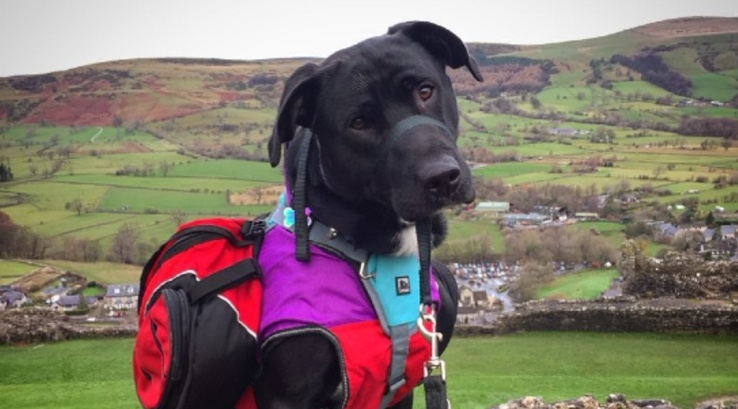 Spud the dog in the Lake District