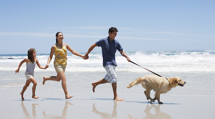 A family and their dog running along the beach holding hands by the waves