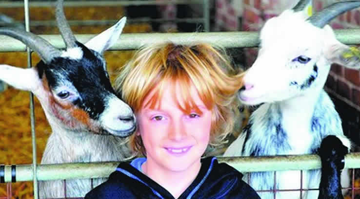 Boy posing with two goats at Playdale Farm Park