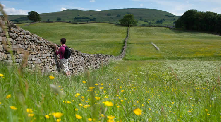 Woman looking over a dry stone wall from a meadow in Hawes