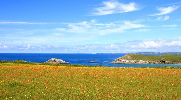 Wild flowers on Polly Joke Cliffs