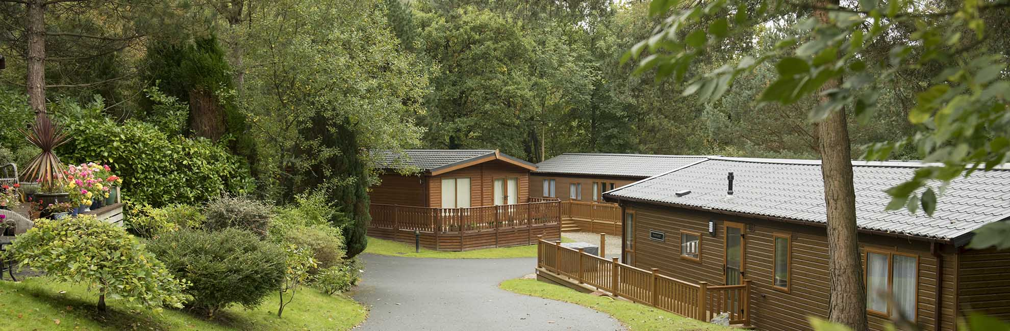 Wooden lodges surrounded by trees at Gatebeck Holiday Park