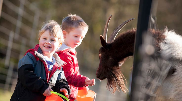 Feeding the goats at Staunton Country Park